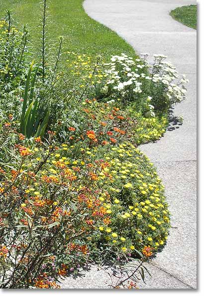 Annuals and perennials along a walkway add color and texture to the landscape year around