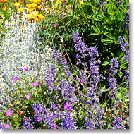 assorted perennials and annuals for color in the garden