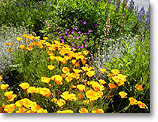 perennials and color and drought tolerant plantings